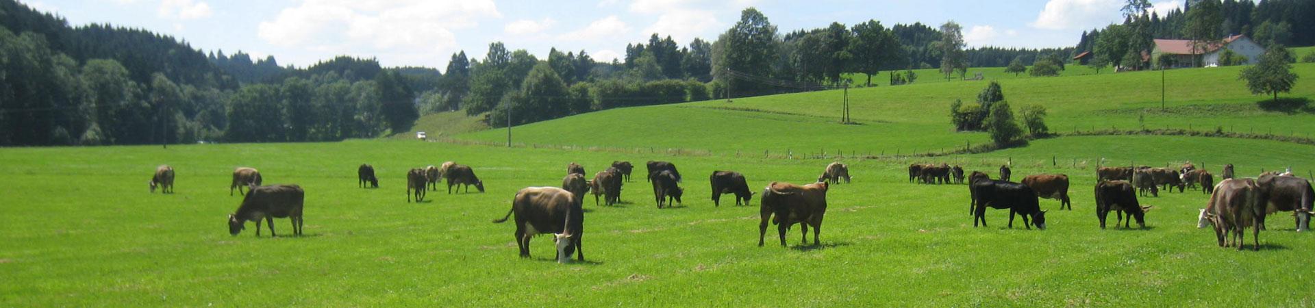 agroecology herd