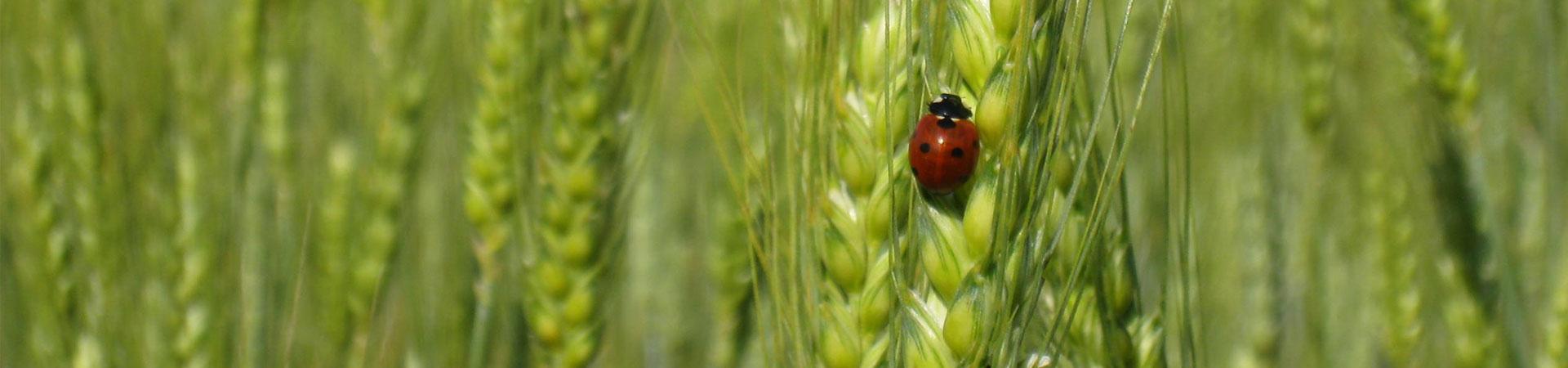 bandeau-agroecology-4