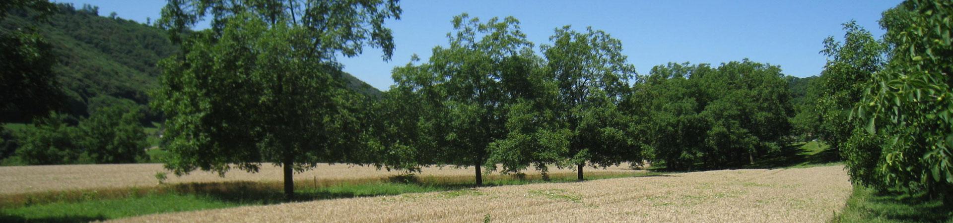 agroforestery