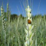 Congresso Internacional Online de Agroecologia
