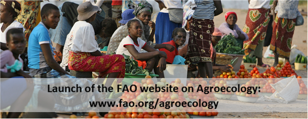 FAO-new-website