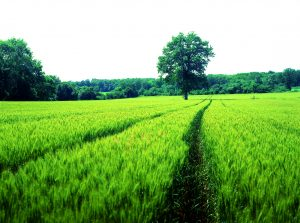 Agroecological Network of Greece initiated