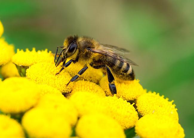 abeille-butine-Ecostack