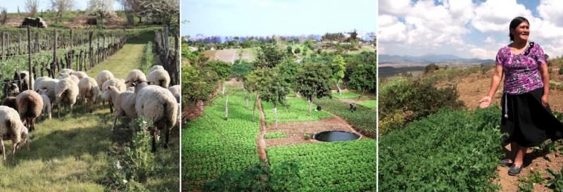 Forum en agroécologie : transitions multiples des territoires