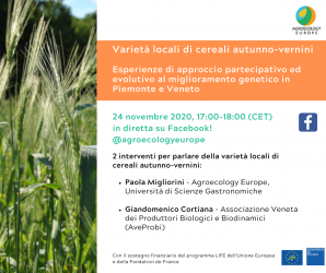 "AEEU Webinar on ""Local varieties of autumn-winter cereals. Experiences of participatory and evolutionary approach to genetic improvement in Piedmont and Veneto"" held on Tuesday 24th of November 2020 in Italian on our Facebook page!"