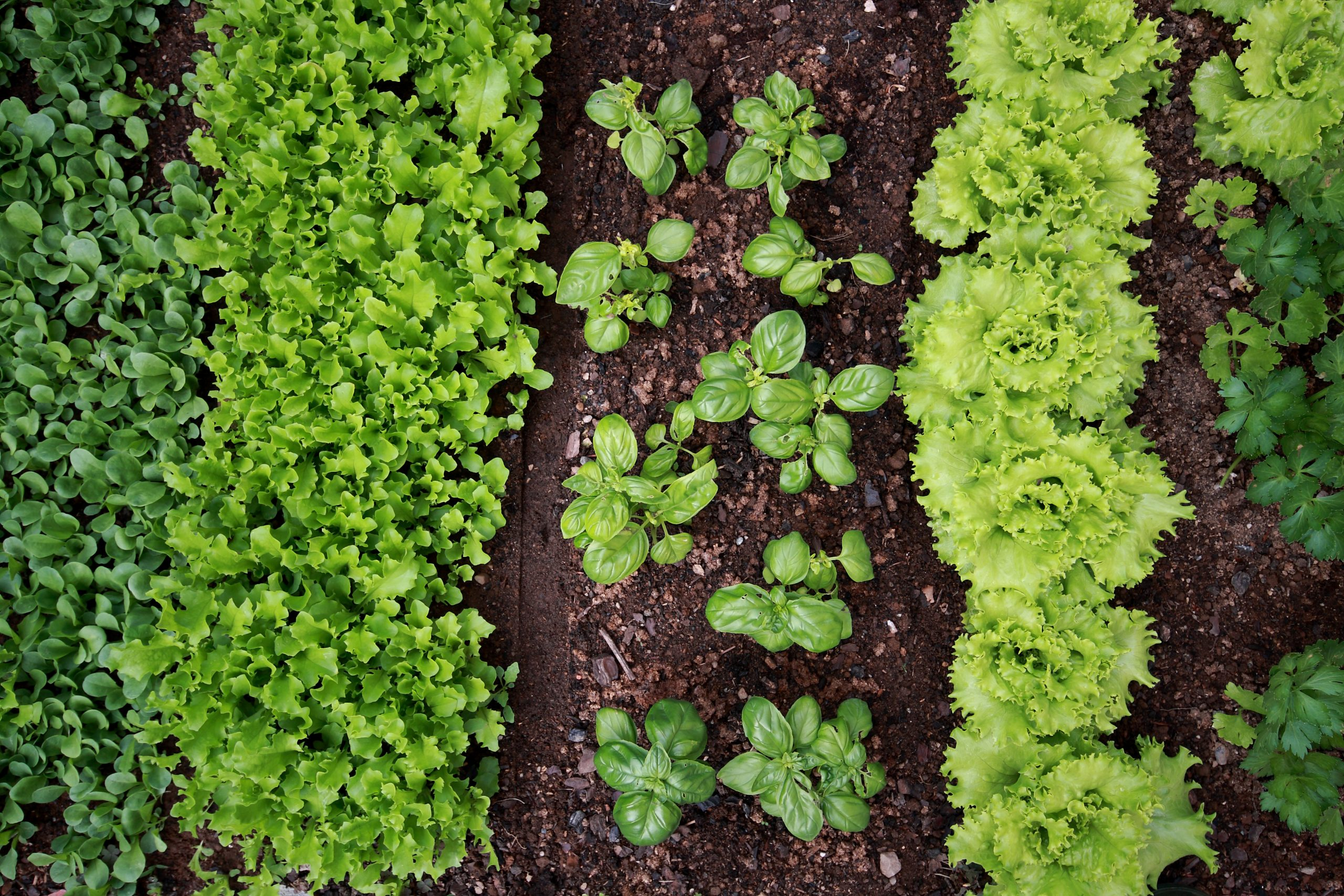 """New article on """"Agroecological principles and elements and their implications for transitioning to sustainable food systems. A review"""""""