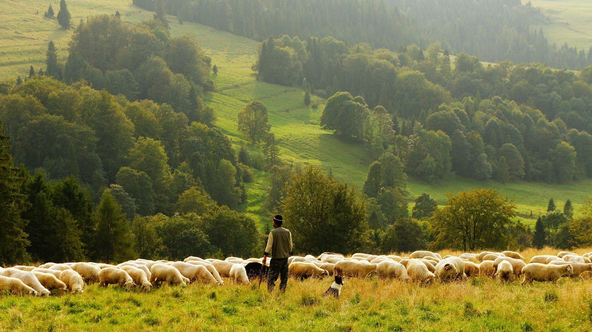 Europe needs more Farmers
